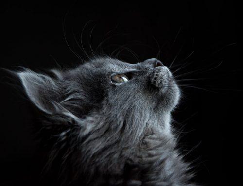 Avoir un chat : Un anti-stress naturel ?